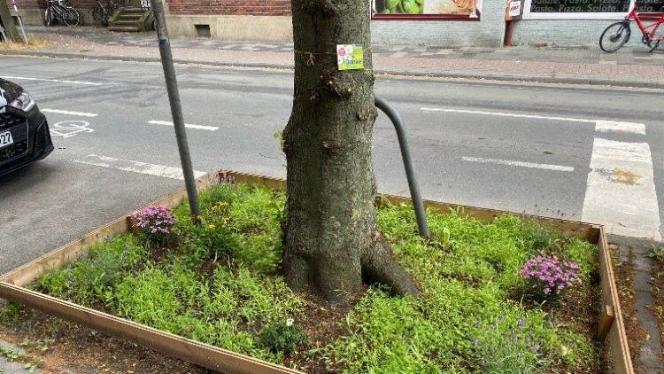 Baumscheibe im Hansaviertel